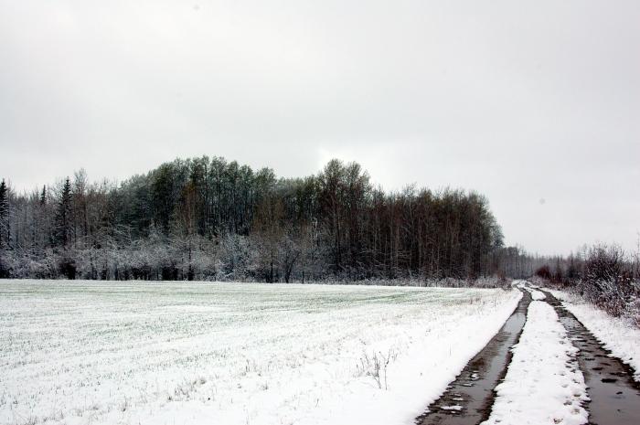 DSC_0194